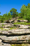 montanha com rochas e árvores Imagens de Stock