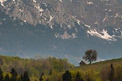 Montanha da árvore da casa Fotografia de Stock