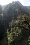 Montanha da floresta Fotos de Stock Royalty Free