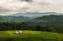 Montanha da floresta de Lanscape Imagens de Stock