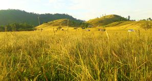 Montanha da grama bonita em Ranong foto de stock royalty free