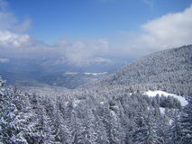 Montanha da neve completamente dos pinhos e os abetos e céu azul Foto de Stock