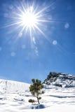 Montanha da neve da natureza da vida de Sun pouca árvore de abeto só Fotografia de Stock