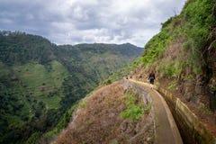 Montanha da nova de Levada que caminha o trajeto, Madeira Fotos de Stock
