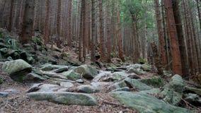 Montanha da pedra da natureza da floresta video estoque