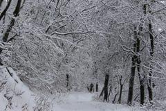 Montanha de Belasitsa da neve em janeiro de 2019 sobre Petrich, Bulgária fotos de stock