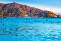 Montanha de Fuji no outono com o céu azul no kawaguchiko do lago Imagem de Stock Royalty Free