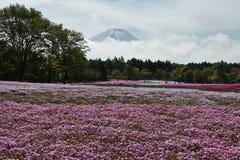 Montanha de Fuji no Tóquio foto de stock royalty free
