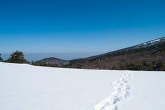 Montanha de Hallasan na ilha Coreia de Jeju no inverno Fotos de Stock