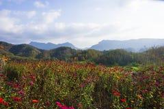 Montanha de Huangshan a oeste do cenário de anhui Imagens de Stock