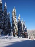 Montanha de Rodopi Fotos de Stock