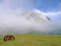 Montanha de Urkiola com um cavalo Imagem de Stock Royalty Free