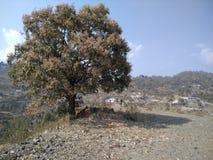 A montanha desserted o carvalho adorado Foto de Stock