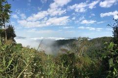 Montanha do chá em XISHUANGBANNA Imagem de Stock