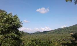 Montanha do coco Imagem de Stock Royalty Free
