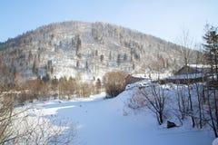 Montanha do pinheiro Foto de Stock Royalty Free
