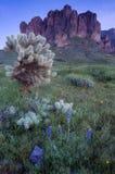 Montanha do Superstition e campo dos wildflowers Imagem de Stock