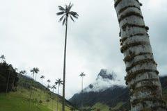 A montanha do vale de Cocora das palmas nubla-se aturdindo palmeiras nevoentas fotografia de stock