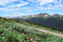 Montanha dos carneiros como visto de Ute Trail em Rocky Mountain National Park imagem de stock royalty free
