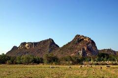 Montanha e campo Imagens de Stock Royalty Free