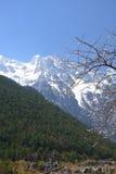 Montanha e flor da neve foto de stock royalty free
