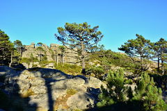 Montanha em Córsega Fotografia de Stock Royalty Free