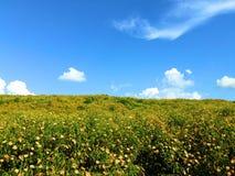 A montanha está completa do cravo-de-defunto da árvore Em um céu brilhante imagem de stock