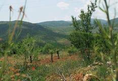 A montanha está na floresta fotografia de stock royalty free
