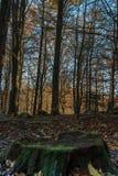 A montanha está tomando a cor durante o outono Imagem de Stock Royalty Free