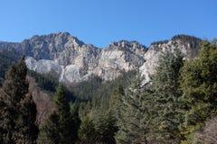 Montanha & floresta em Jiuzhaigou Foto de Stock