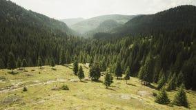Montanha florestado com pinheiros Fotografia de Stock