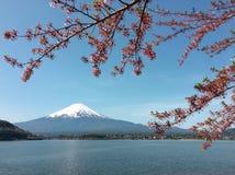 Montanha Fuji com as flores de cerejeira no lago Kawaguchiko em um dia ensolarado e em um céu claro Fotos de Stock Royalty Free