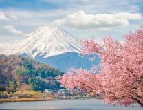 Montanha Fuji na mola, flor de cerejeira Sakura Foto de Stock