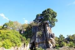 Montanha Loei Tailândia de Suan Hin Pha Ngam imagem de stock royalty free