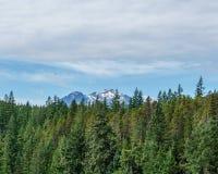 Montanha longe através da floresta com céu azul e paisagem do verão das nuvens do branco Imagem de Stock Royalty Free