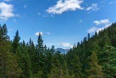 Montanha longe através da floresta com céu azul e paisagem do verão das nuvens do branco Imagens de Stock