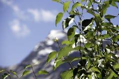Montanha na distância Foto de Stock