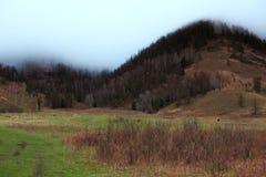 Montanha na névoa da manhã Foto de Stock Royalty Free