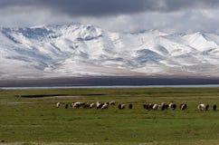 Montanha nevando em kirghizy Foto de Stock Royalty Free