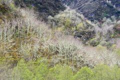 Montanha O Courel Espanha em Lugo, Galiza Imagem de Stock Royalty Free