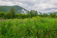 Montanha, prado, flores, névoa Fotografia de Stock Royalty Free