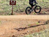 Montanha que biking acima de uma fuga na floresta Fotografia de Stock Royalty Free