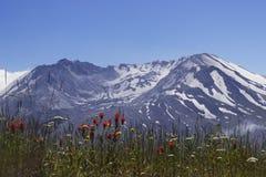 Montanha St Helens Fotos de Stock Royalty Free
