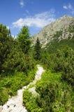 Montanha verde bonita fotografia de stock royalty free