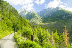 Montanha verde bonita foto de stock