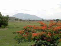 montanha vermelha da flor da árvore da vista imagem de stock royalty free