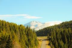 Montanhas à floresta fotografia de stock