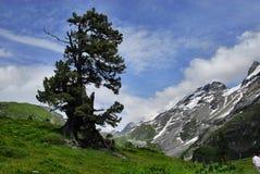 Montanhas altas Fotografia de Stock Royalty Free