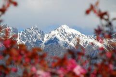 Montanhas através da flora imagem de stock