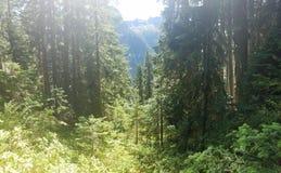 Montanhas através das árvores fotos de stock